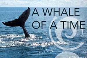Whale-of-a-Time-4-1